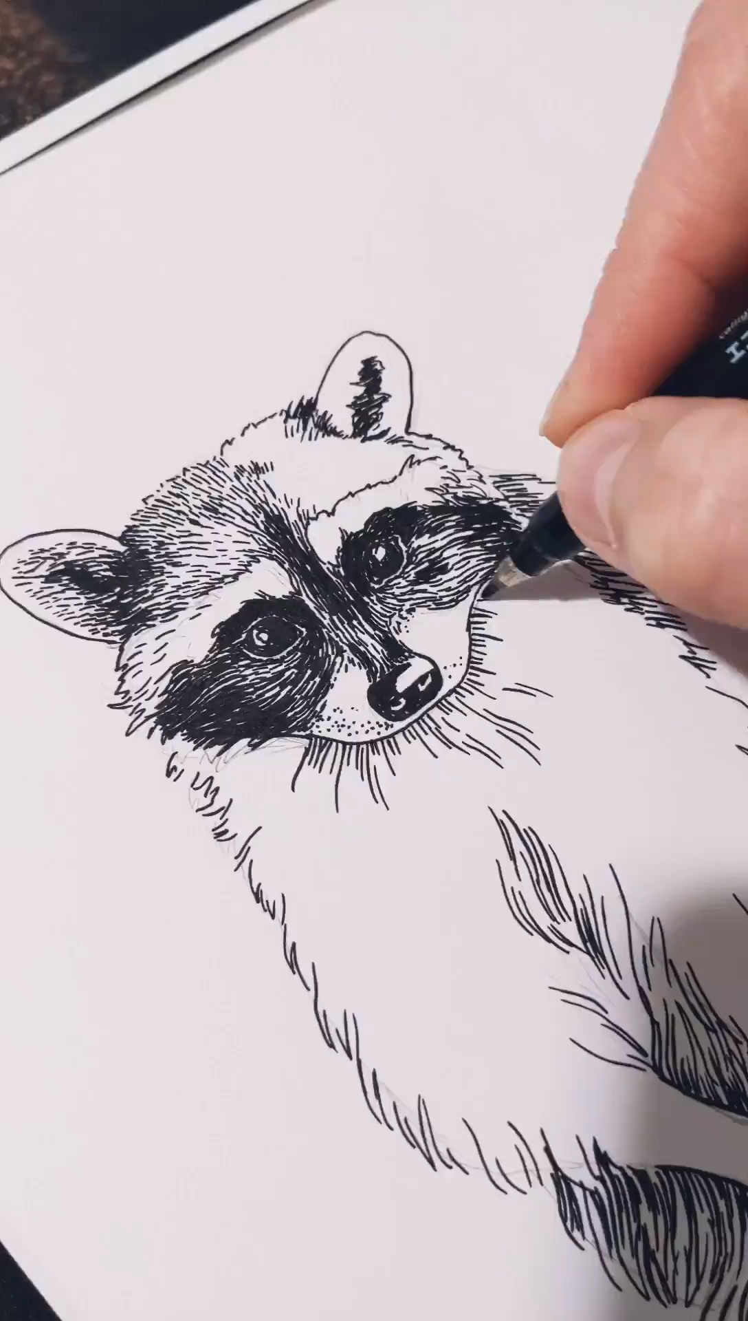 Sketching a raccoon with black ink. A little anima
