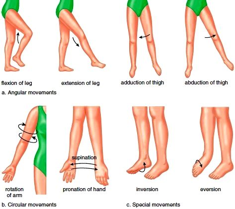 synovial joints | Joints (Articulations). Fibrous Joints ...