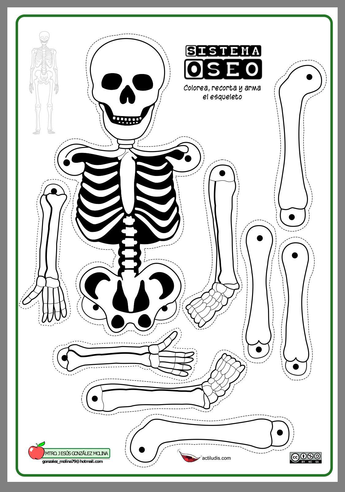Pin By Elizabeth Washington On גוף האדם Skeleton For Kids Human Body Activities Skeleton Craft [ 1602 x 1125 Pixel ]