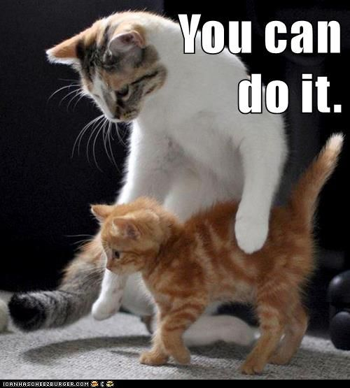 Growth Mindset Memes You Can Do It Cats Kittens Cute Animals