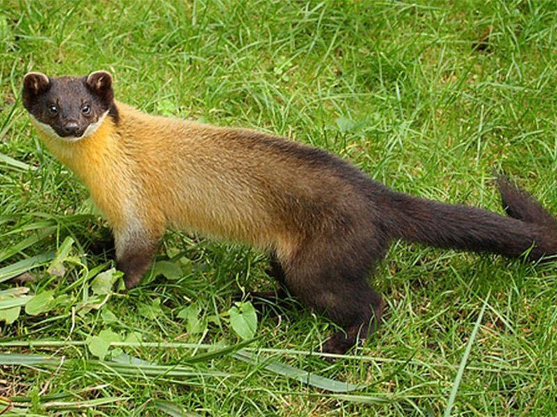 Majathal Sanctuary in Himachal Pradesh, India Animals