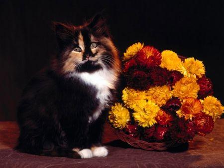 Kitten With Basket of Flowers - Cats Wallpaper ID 1711099 - Desktop Nexus Animals