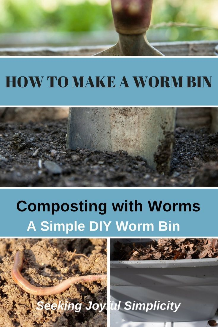Composting with worms is a great way to turn kitchen scraps into ...
