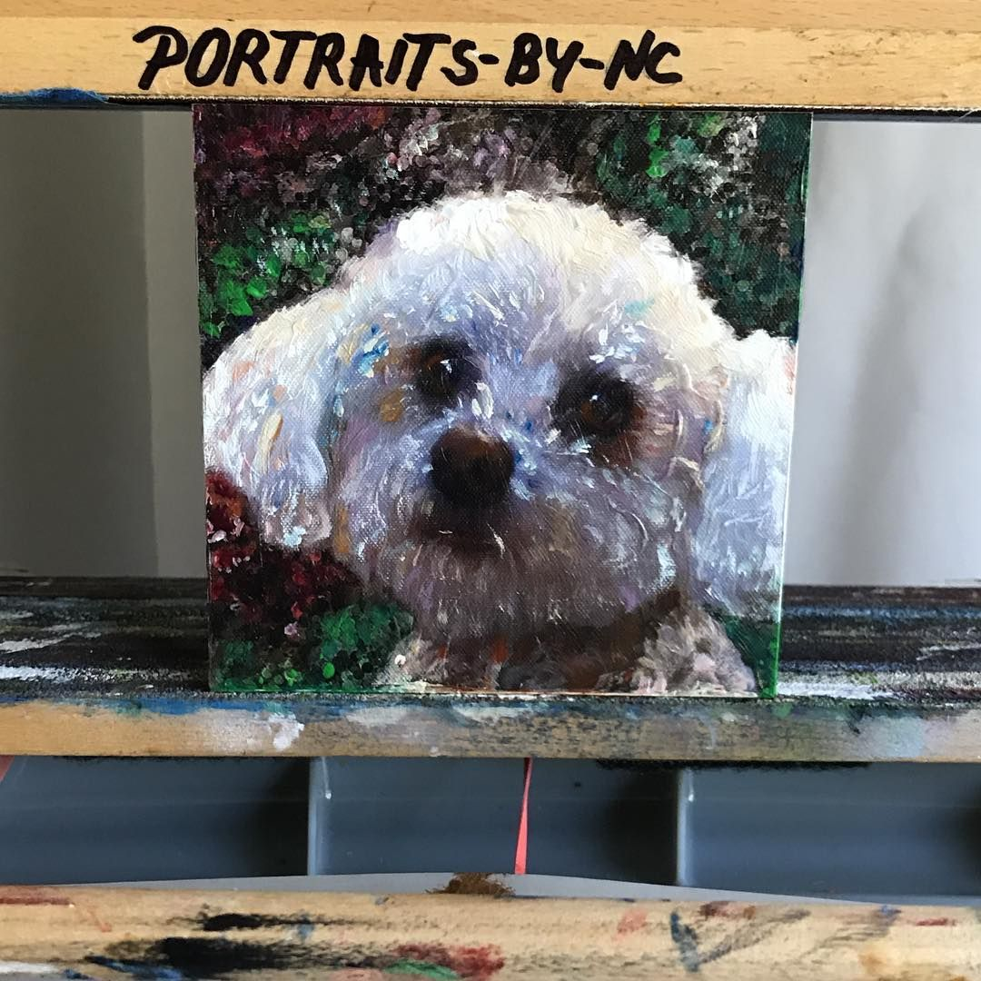 Today on my easel - a small 4x4in of a #poodle #portrait is getting its final touches. #portraits-by-nc.com #poodlesofinstagram #poodlelove #poodles #poodlelife @benjitoypoodle @hanathepoodle @poodlelove