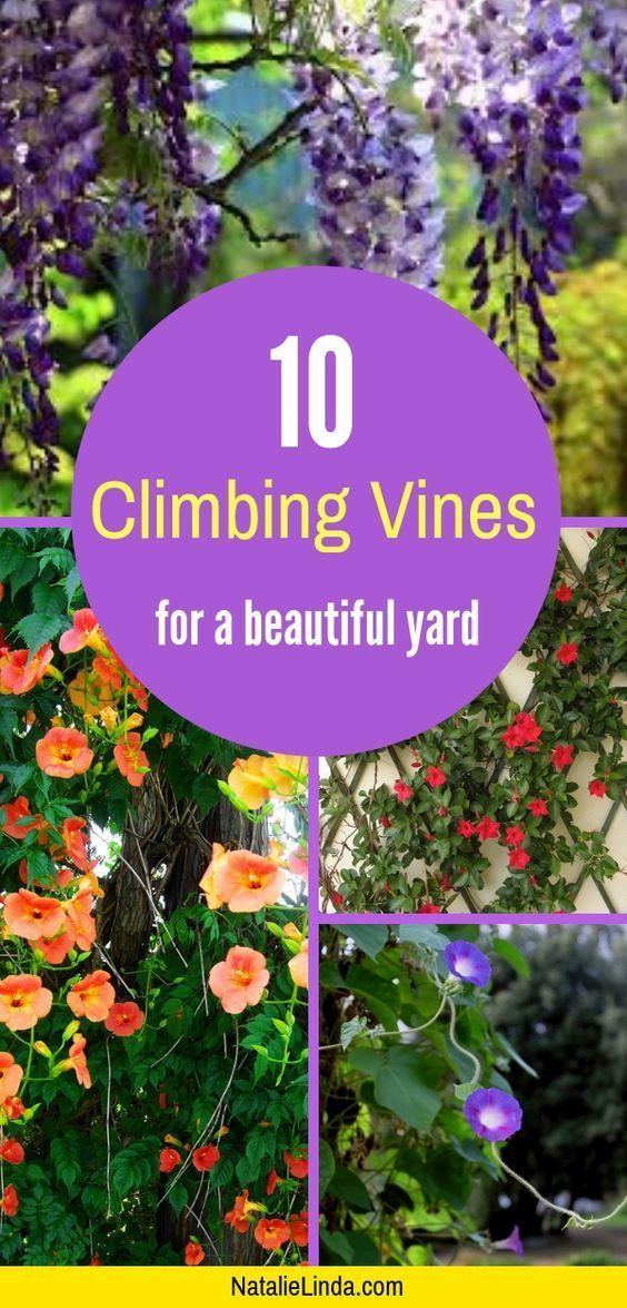 10 Climbing Vines That'll Beautify Your Garden #gardendesign