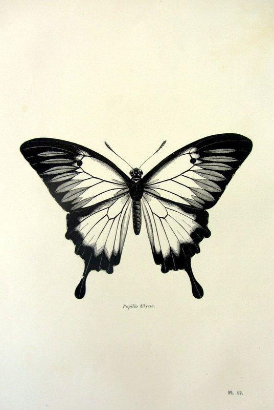 Papillon Ulysses antique 1860 imprimer, insecte vintage gravure, papillon de lépidoptères bizarrerie papillon bleu de montagne, plaque de