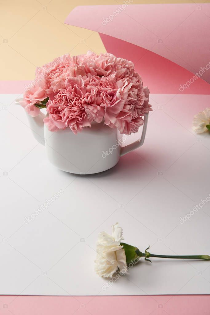 Close View Beautiful Tender Pink Carnation Flowers White Teapot Stock Picture ,