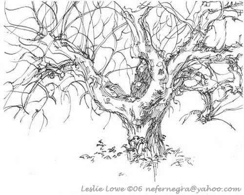 Dead Fig Tree Fig tree and Tattoo - new coloring page fig tree