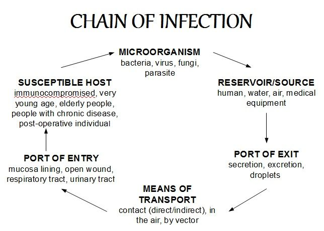 Chain Of Infection More Detailed The Chain Of Infection