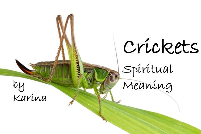 Crickets Spiritual Meaning What It Means When You See A Cricket Spiritual Meaning Cricket Spirit Animal Totem