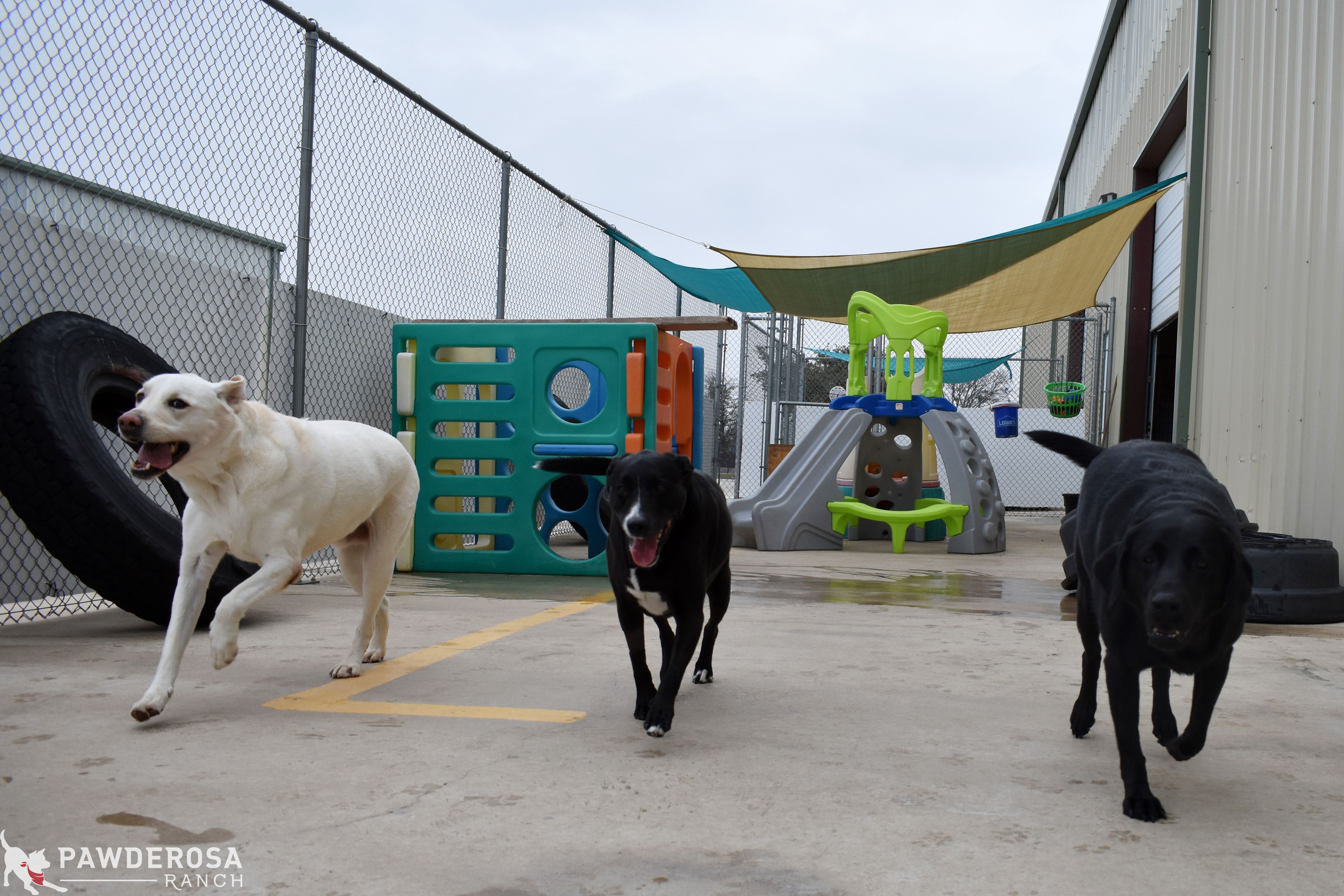 Home Dog Daycare Dog Boarding Best Dogs