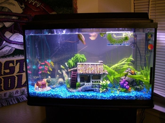 How to decorate your boring fish tank fish tanks fish for Aquarium decoration ideas freshwater