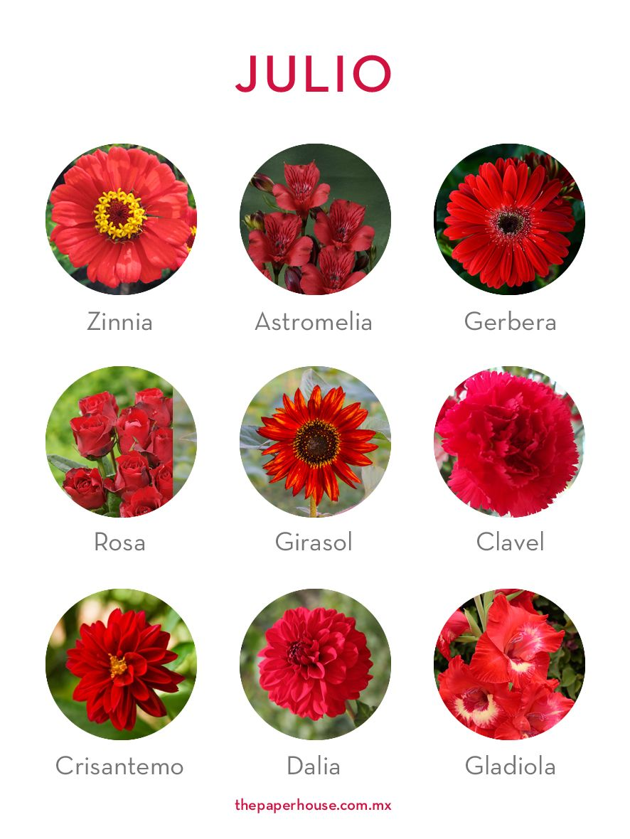 Flores De Julio Floresdetemporada Floresdejulio Flores Julio Thepaperhouse Nombres De Flores Guia De Flores Flores De Temporada