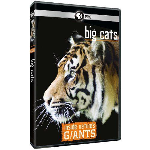 PBS Inside Nature's Giants Big Cats Big cats, Cats