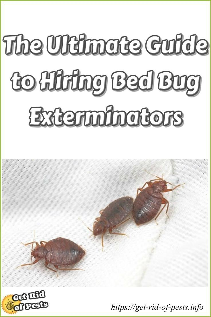 termite lee removal home exterminator mo pest and bug prevnextpause exterminators bed summit