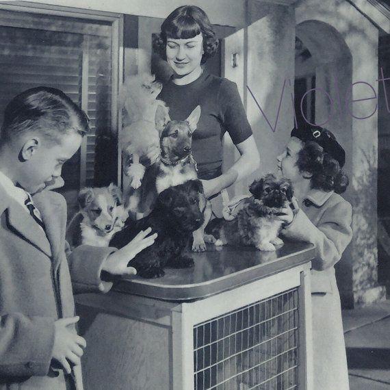 Vintage Poodle Parlour Lot of 13 Photos 1950s by VioletBeans