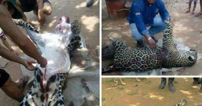Arrêtez de tuer des espèces menacées