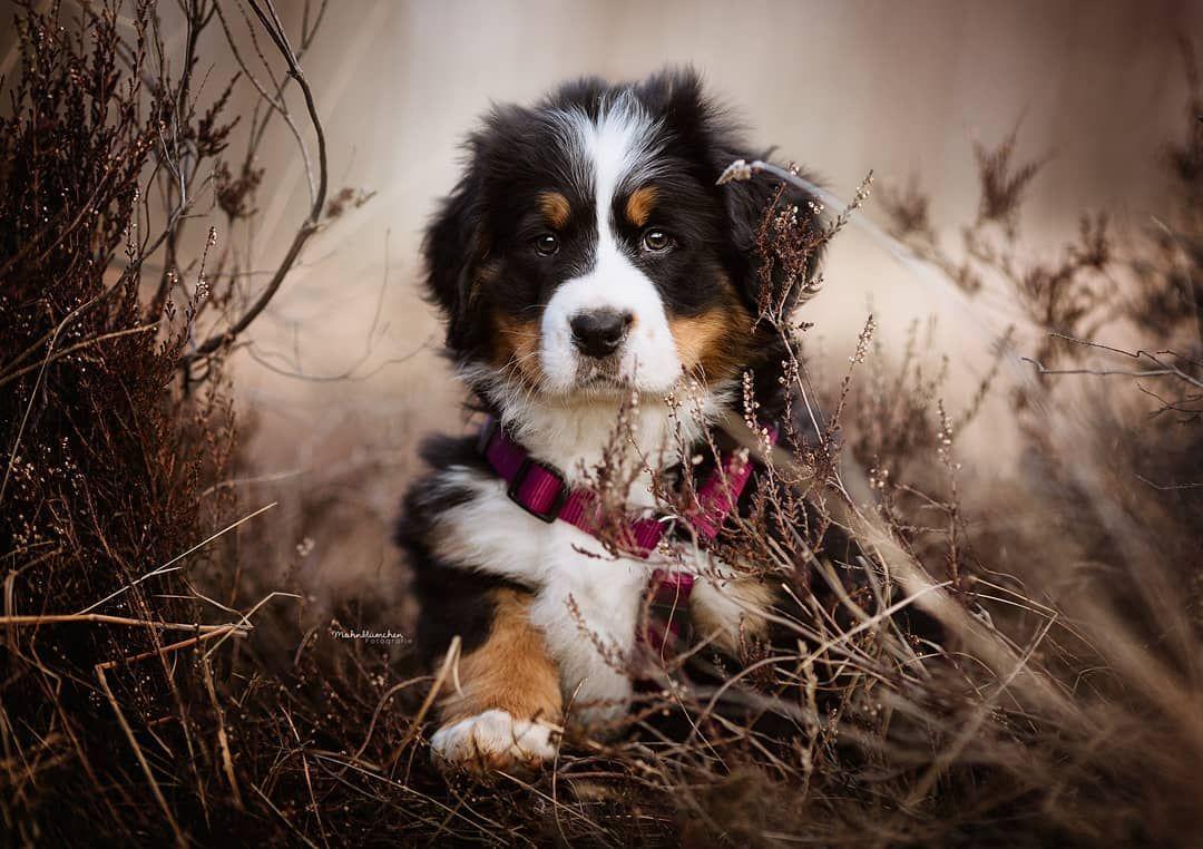 Bereit Fur Einen Zuckerschock Eigentlich Wollte Ich Euch Erst Ein Bild Von Gestern Zeigen Aber Da Ich Mal Wieder Nur Von U In 2020 Hundefotografie Tierplakate Hunde
