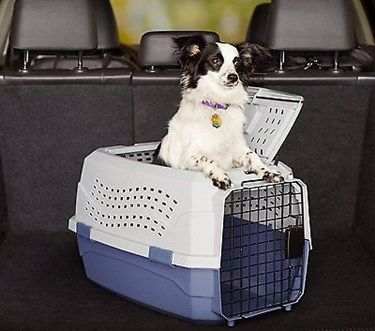 Httppetcarrierverdictbest Pet Carrier With Top Opening
