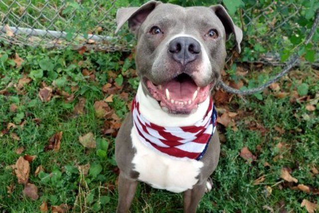 Silver A1083347 Nyc Dogs Poor Dog Dog Adoption