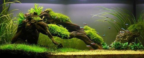 Driftwood And Mosses Always A Succesfull Combination Aquascape Aquarium Aquascape Aquarium Fish Tank