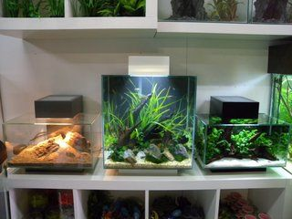 Fluval Edge LED Photo By TheLearned