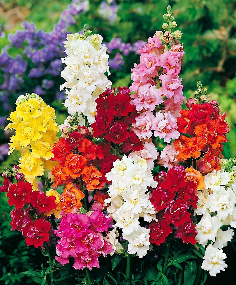 Blumen Garten Planen Gestaltung Im Landhausstil Blumen Anbauen Cottage Garten Design Garten