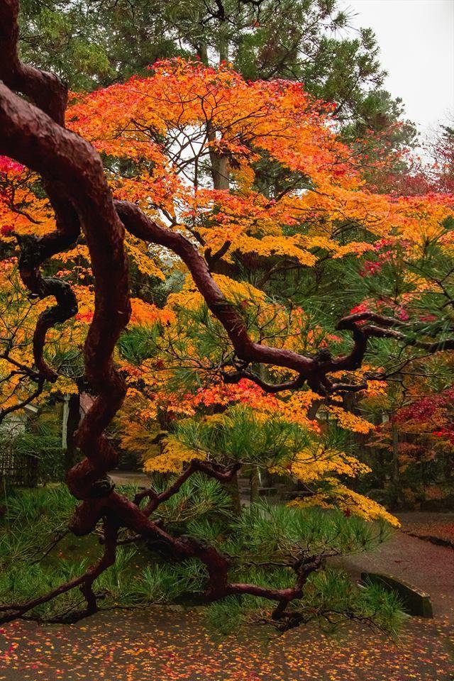 seizoenen japan