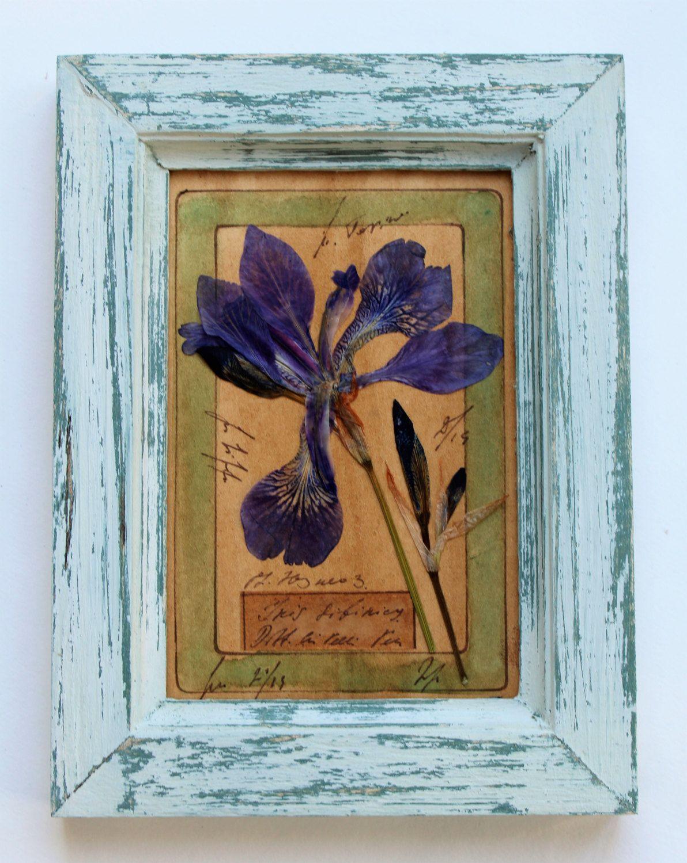 pressed botanicals, Herbarium, dried flowers framed, 8x6 inches, (20 ...