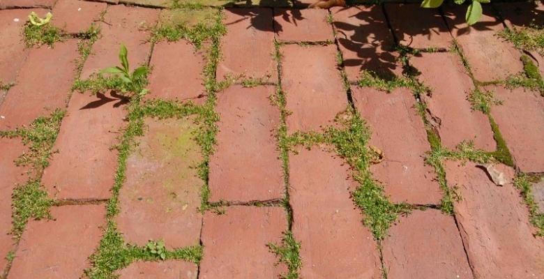 solution bio contre les mauvaises herbes dalle de beton mauvaises herbes et trottoir. Black Bedroom Furniture Sets. Home Design Ideas