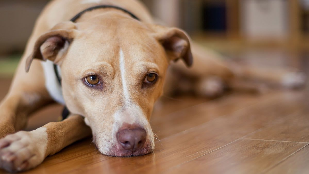 Some Unsuspecting Ings And Foods Can Be Toxic For Dogs Consumer Reports Has What You Need To Know