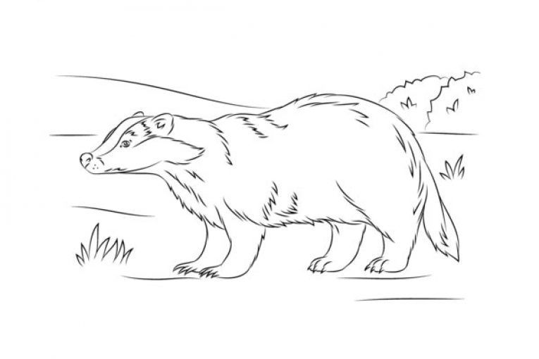 Cute European Badger Coloring Page Coloring Pages Cute