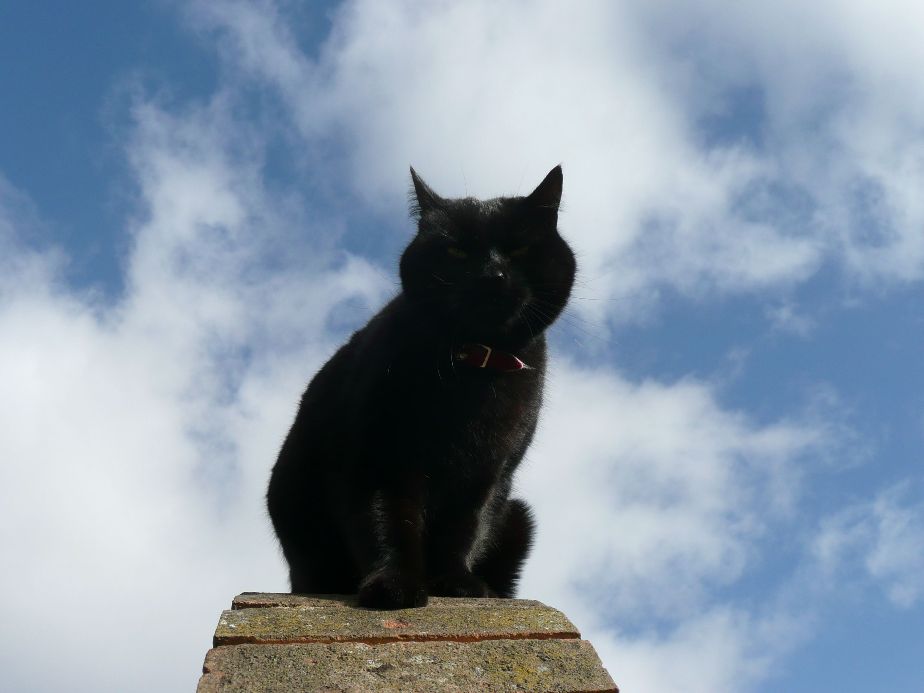 Blackcats Are Feeling On Top Of The World Because Tomorrow November 17th Is National Black Cat Day Pet Tags National Black Cat Day Black Cat Day