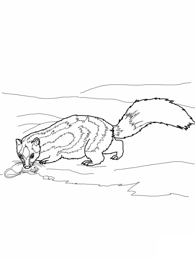 Free Printable Skunk Coloring Pages For Kids Coloring Pages For Kids Toddler Coloring Book Free Printable Coloring