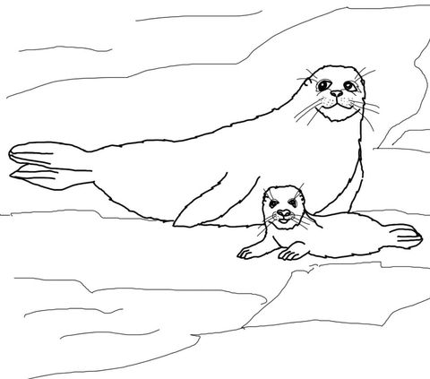 Harp Seal Mother And Baby Coloring Page Free Printable Coloring Pages Baby Coloring Pages Baby Harp Seal Coloring Pages