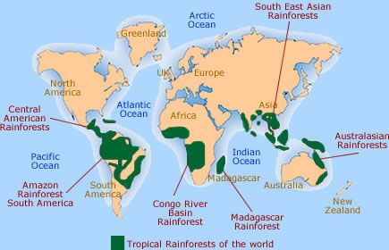 Pin by dorie glynn on mrsglynnsclass pinterest rainforest map tropical rain forest home gumiabroncs Gallery