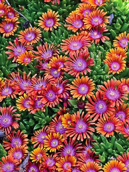 30 Rock Garden Plants That Perform Like Rock Stars Garden Plants Design Rock Garden Plants Landscaping With Rocks
