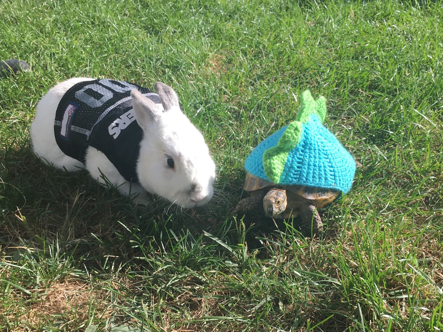 Richard and Sweet Pea gearing up for the Halloween Race http://ift.tt/2dTamBE