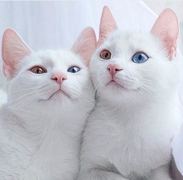 Pin By Beemm Bm On Cats Cute Cats Beautiful Cats Kittens Cutest