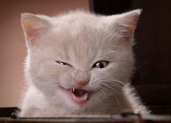 Kotki Sa Palavi 1 Funny Cute Cats Evil Cat Funny Cat Fails