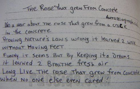 the rose tha grew from concrete