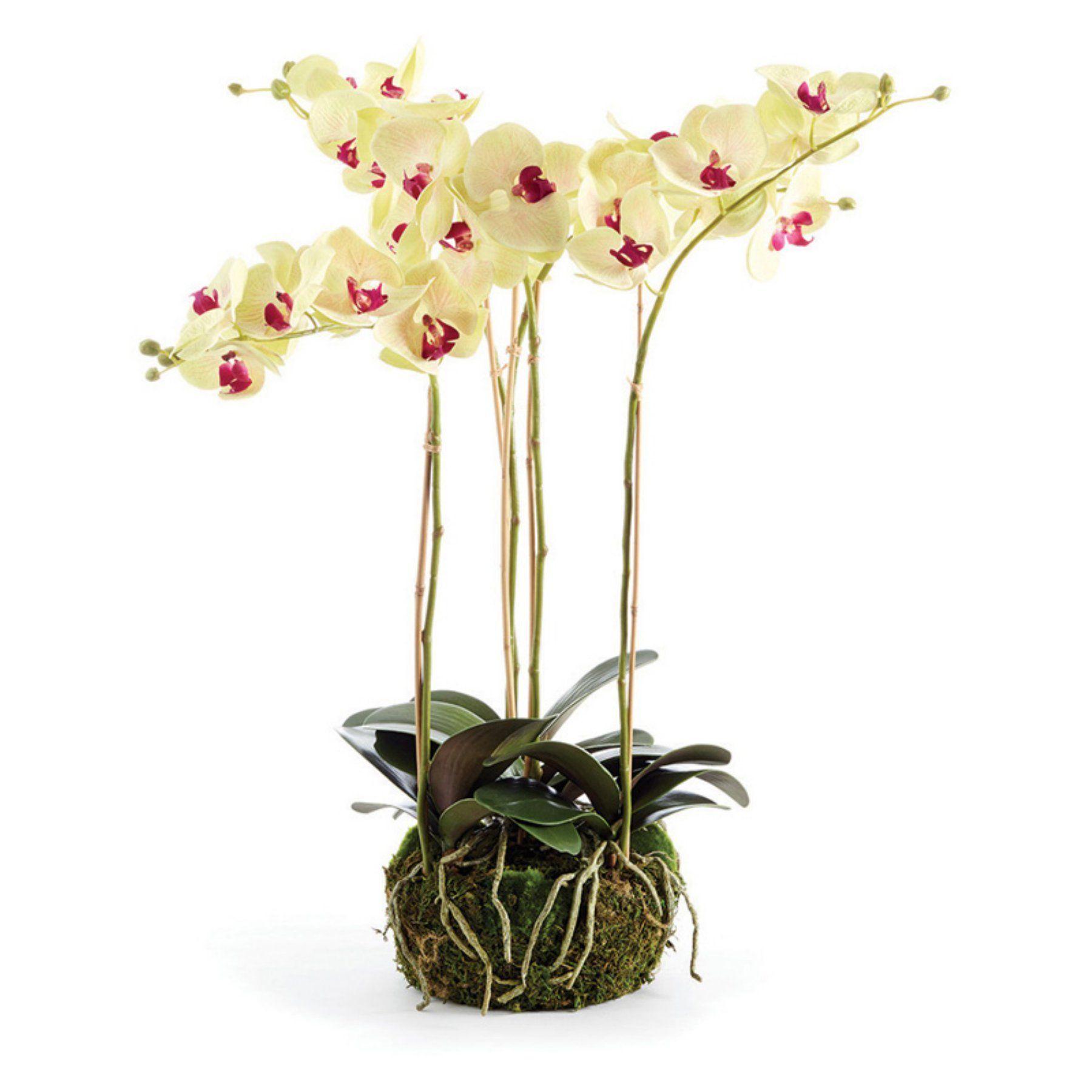 Napa Home and Garden Phalaenopsis 25 in. Bowl DropIn Silk