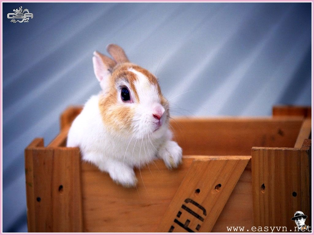Rabbit Wallpapers Free Download Cute White Hd Desktop Wide Images 1600 1000 Rabbit Image Wallpapers 53 Wallpapers Rabbit Wallpaper Baby Bunnies Rabbit Photos