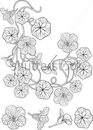 Art nouveau capucine fleur floral frame coin tatouage avec des l ments singuliers tattoos - Coloriage fleur capucine ...