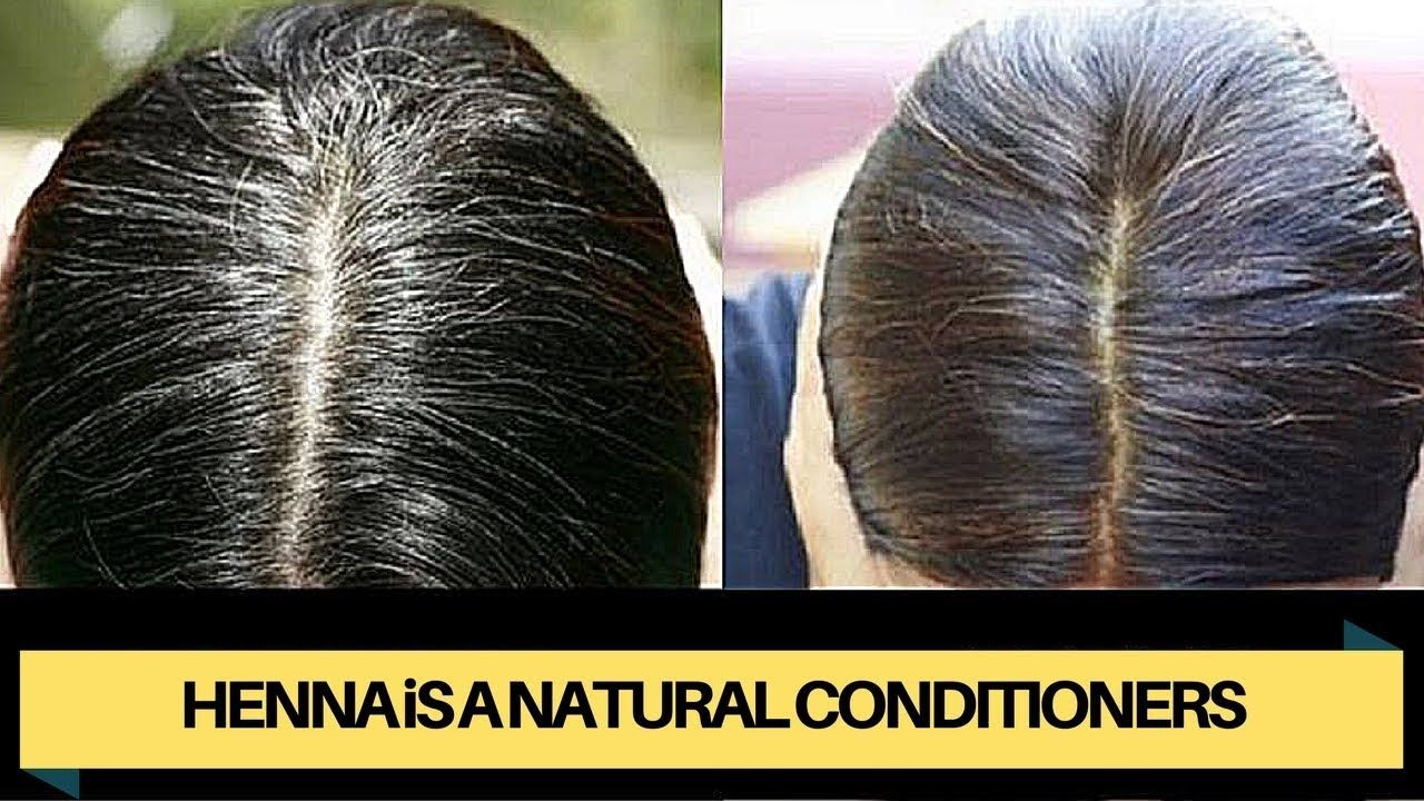 Onion Juice And Henna For Reversing Grey Hair Henna Is A Natural