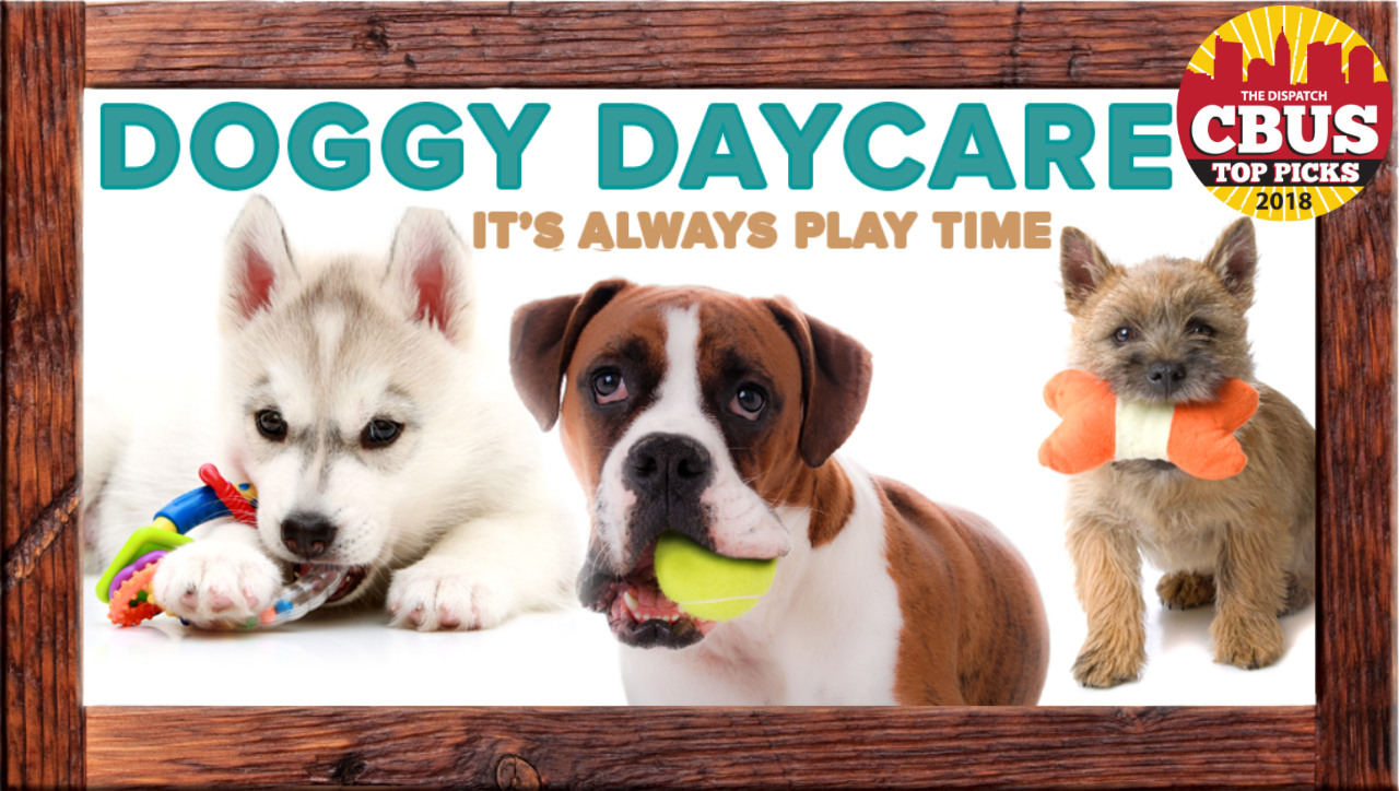 Dog Boarding Grooming Adoption Daycare Pataskala Columbus Ohio Cat Daycare Dog Daycare Dog Boarding