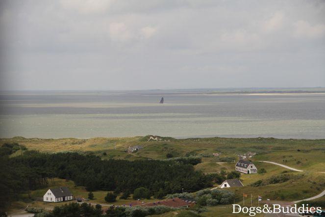 Ameland - Urlaub mit Hund - Reisen mit Hund - Niederlande - Holland - Leuchtturm - Ausblick - Strand - Insel - Unterwegs mit Hund - Hundeblog - Hundeblogger - Dogblog - Dogblogger - dogsundbuddies.com