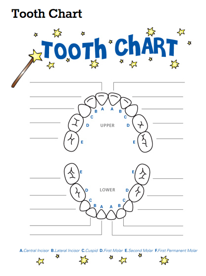 Tooth chart teeth eruption charts for kids also baby fairy rh pinterest