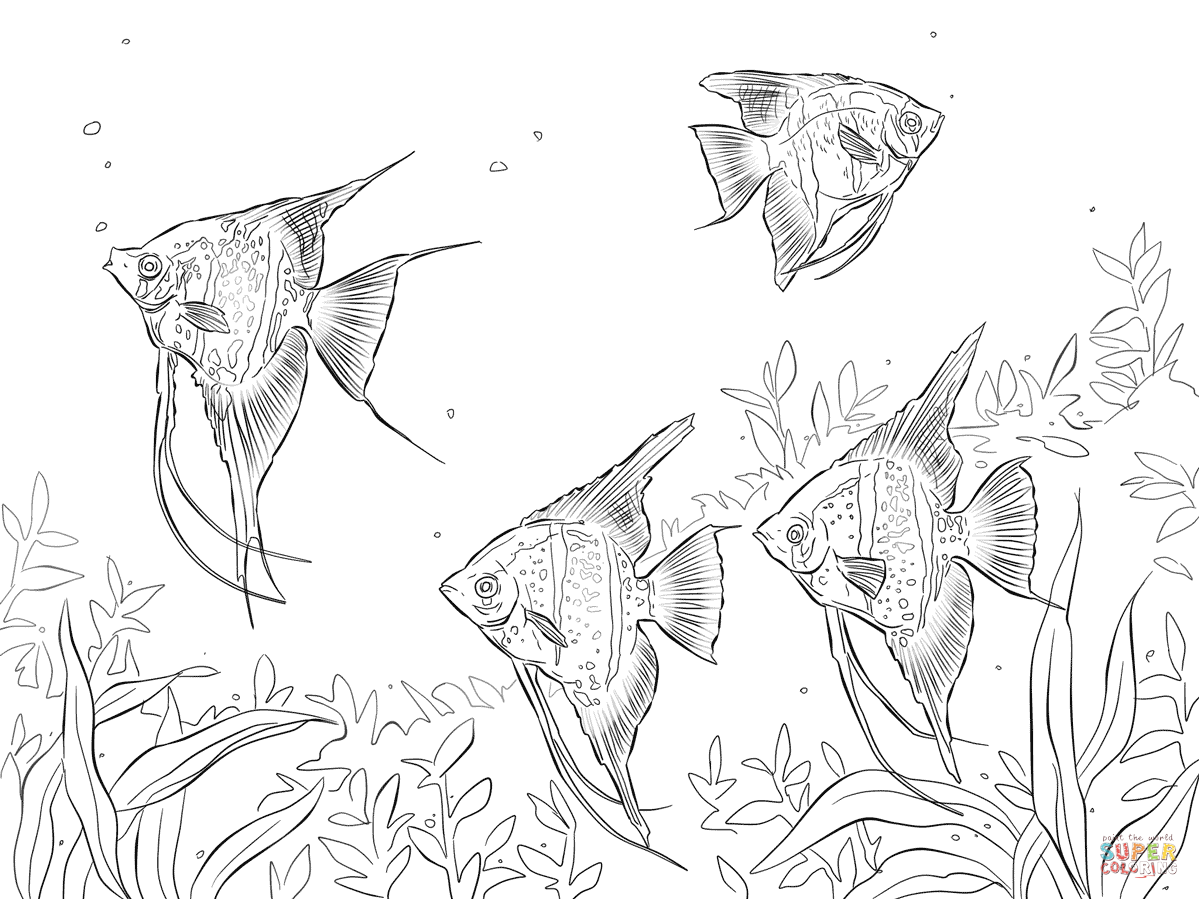 Freshwater Angelfishes Fish Coloring Page Fish Drawings Coloring Pages