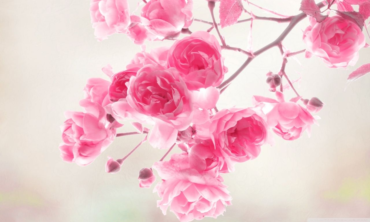 Wallpaper Pretty Pictures Beautiful Flowers Images Pink Flowers